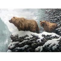 Два медведя. Картина по номерам 40х50
