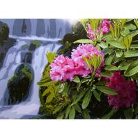 Картина по номерам Цветы у водопада 40х50