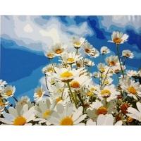 Картина по номерам Ромашки в небе 40х50